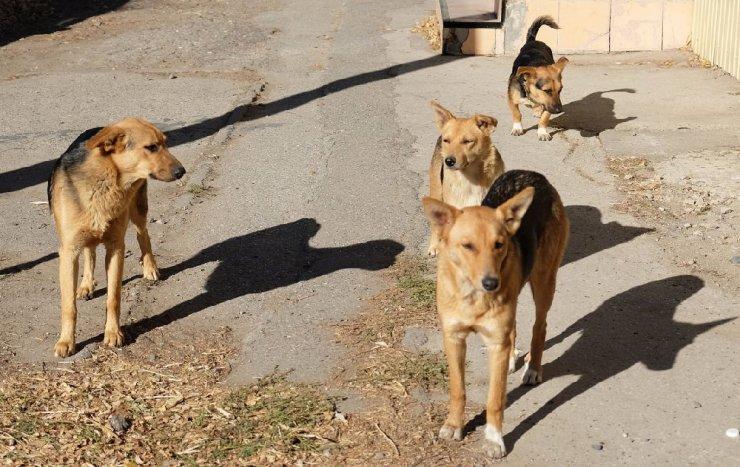 Астраханские окраины «украшают» трупы животных