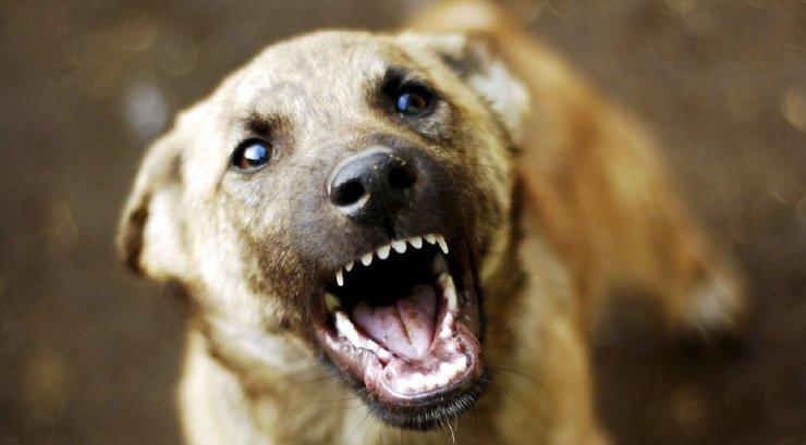 Астраханские власти прекратили отлавливать бродячих собак