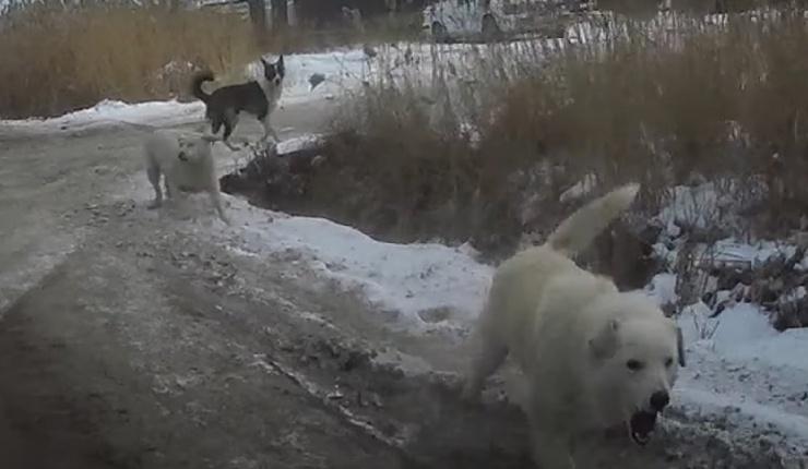 В астраханской глубинке продолжают тратить миллионы рублей на бродячих собак
