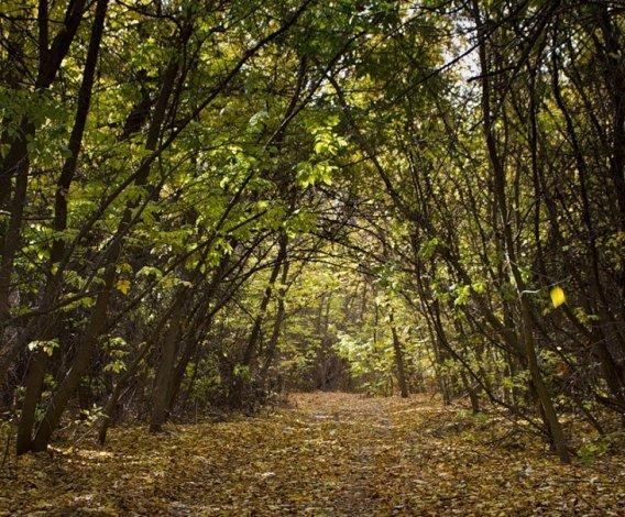 Астраханские леса запретили посещать