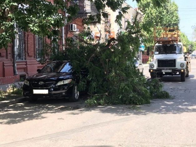 В центре Астрахани на иномарки упало дерево