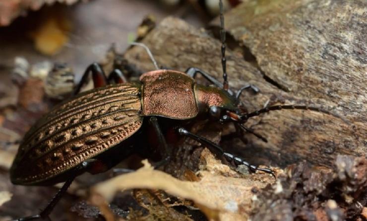 Астраханцы могут полюбоваться вредными насекомыми