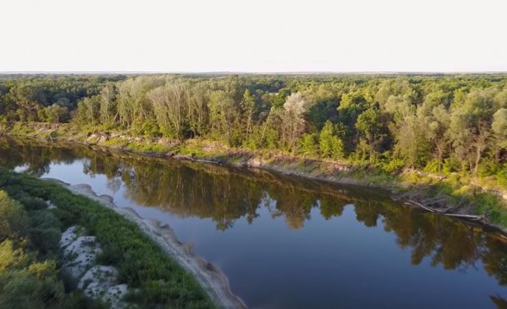 Какие «болезни» обитают в российских реках