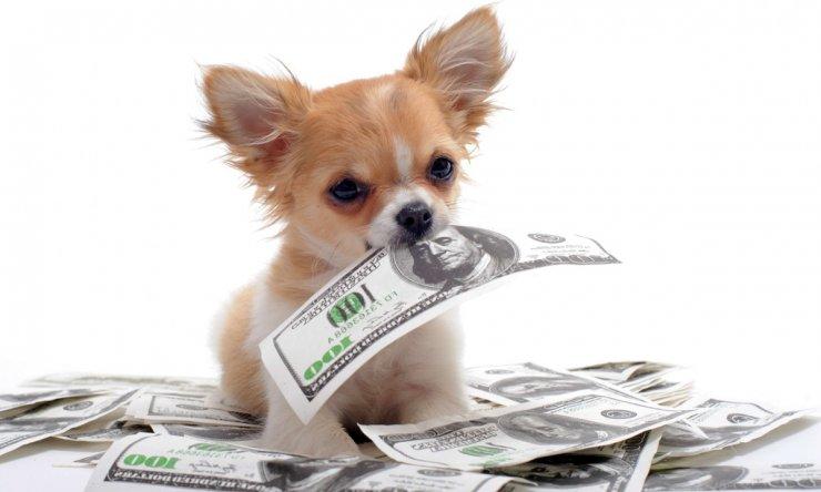 В астраханской глубинке потратят миллионы на бродячих собак