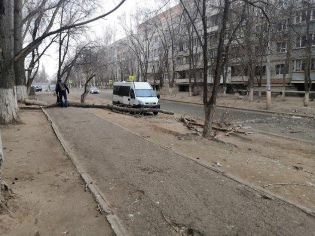 В Астрахани ветер валит деревья