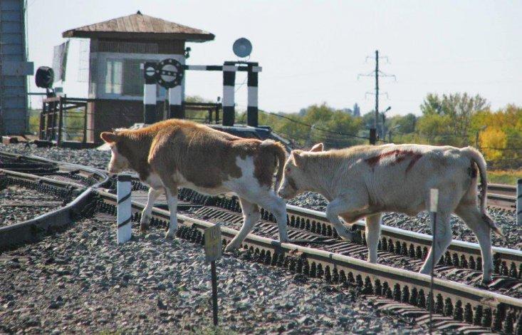 На железной дороге в Астраханской области строятся защитные ограждения от скота