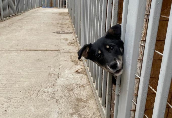 Отлов бездомных собак в Астрахани возобновили