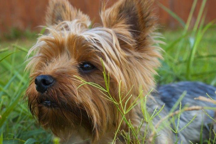 Астраханские полицейские вернули мальчику потерявшегося щенка