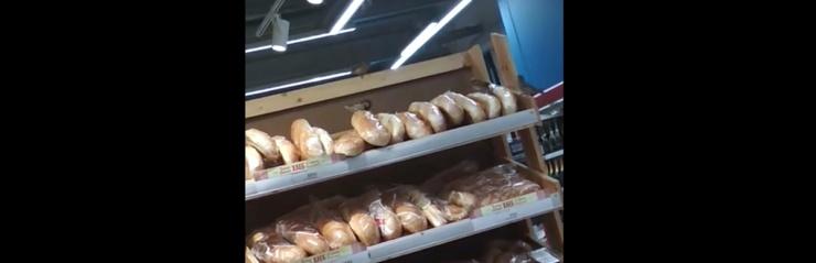 Астраханец снял на видео клюющих хлеб в «Магните» воробьев
