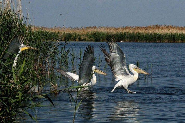 В Астрахани запрещены отдых и рыбалка на водно-болотных угодьях