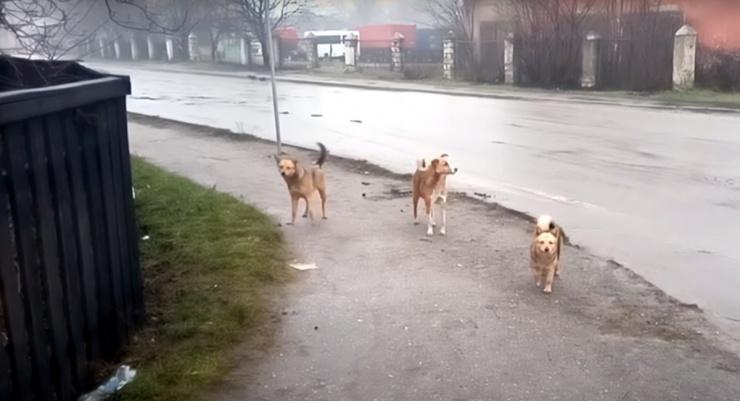 На улице Савушкина на астраханку напала стая собак