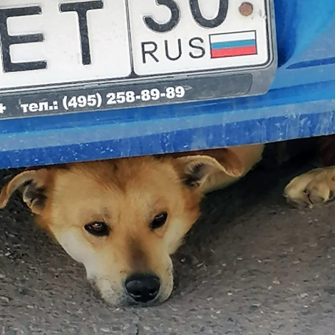 И снова о бродячих собаках