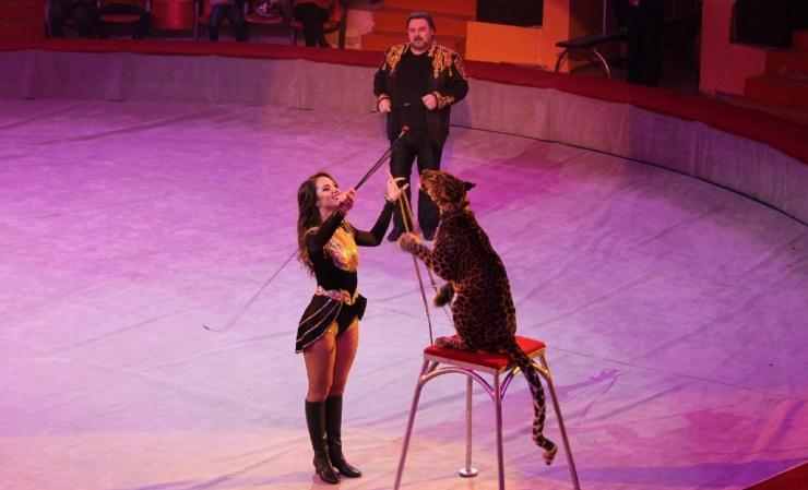 Знаменитые дрессировщики рассказали в Астрахани о цирковых секретах и тайнах