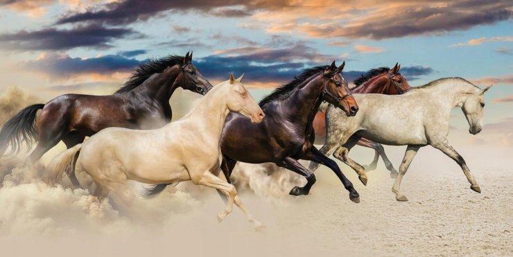 Под Астраханью таинственно исчезли два табуна лошадей