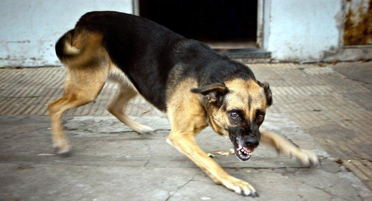 С начала года собаки укусили 1110 астраханцев