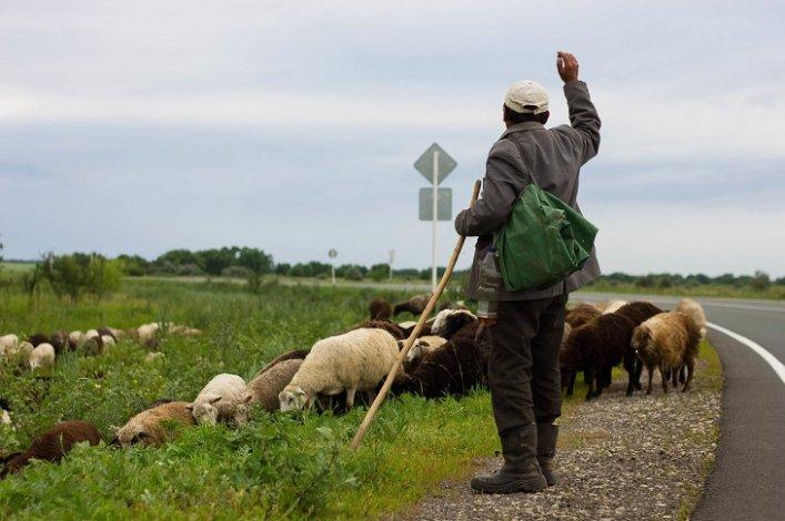 Пастух из Астраханской области пошёл на преступление, чтобы угодить своей тёще
