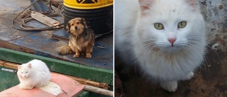 Интернет-пользователи со всей страны пытаются найти дом для кота и пса из Астрахани