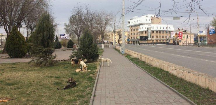 Улицы Астрахани захватывают бродячие собаки