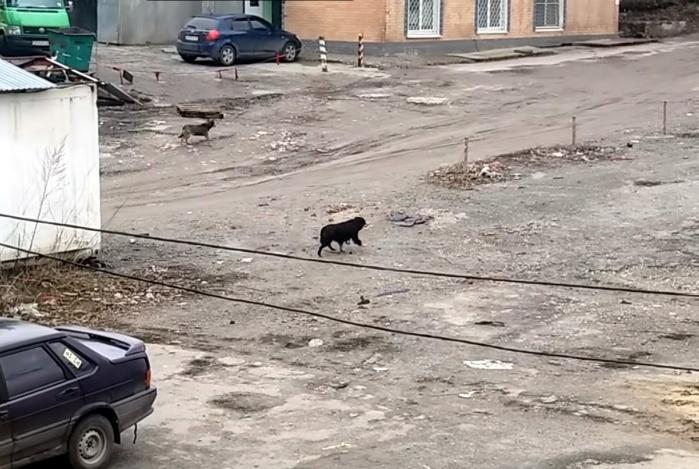 Как убивали собак в Астрахани