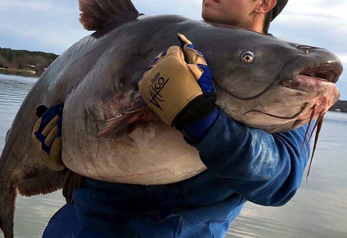 Два рыбака вытащили сома в полцентнера