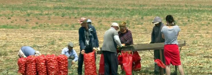 Астрахань оказалась в российских лидерах по производству бахчевых