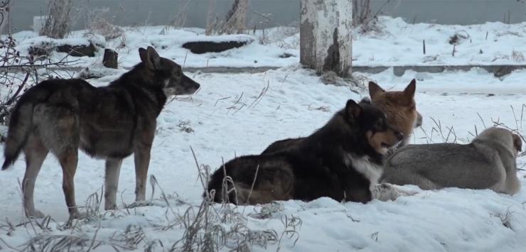 В Астрахани зарегистрировано два случая бешенства среди бродячих собак