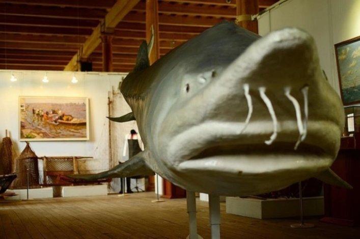 Астраханской рыбалке посвятили очередную выставку
