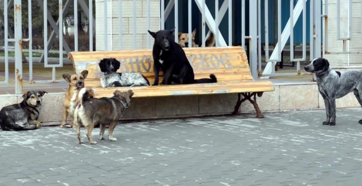 Следком: тысячу астраханских собак стерилизовали только на бумаге