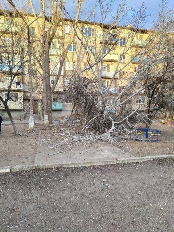 В Астрахани сухостой чуть не стал причиной трагедии