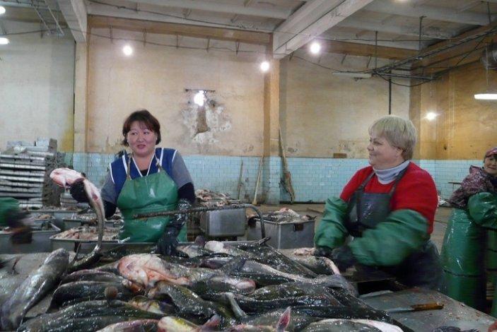 В Астраханской области идёт подготовка к осенней путине