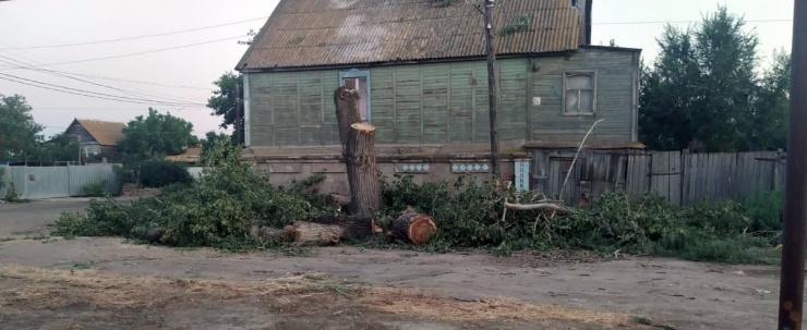 Соратник Шеина похвалился вырубкой деревьев в Астрахани
