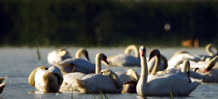 В Астраханском заповеднике установлен карантин по птичьему гриппу