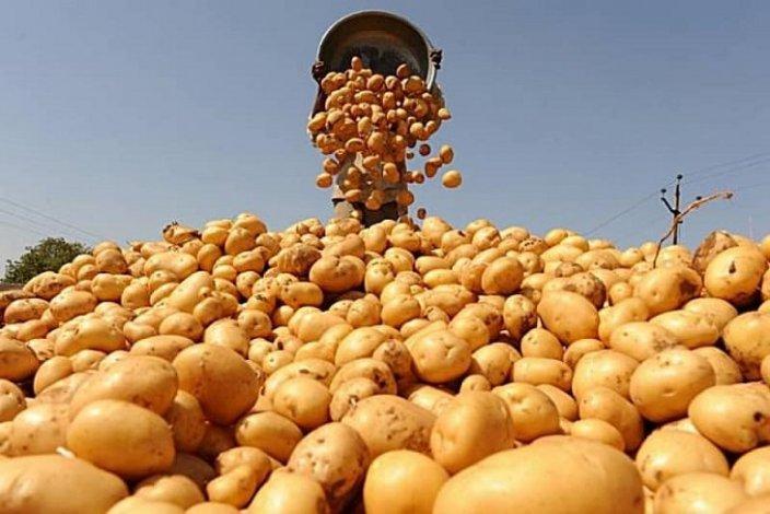 Астраханские аграрии собрали к началу осени хороший урожай
