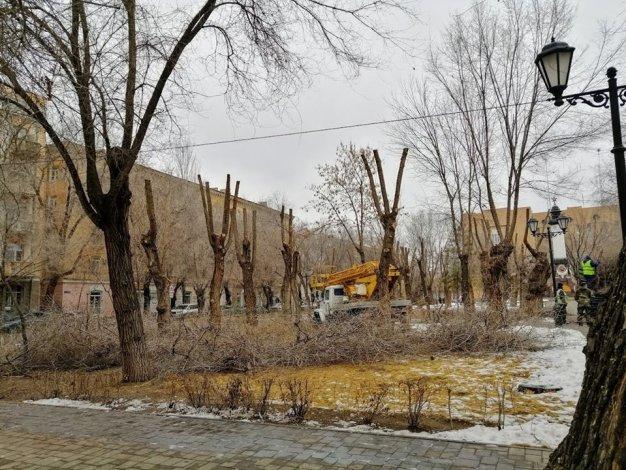Астраханцы возмущены опиловкой деревьев в Морском саду