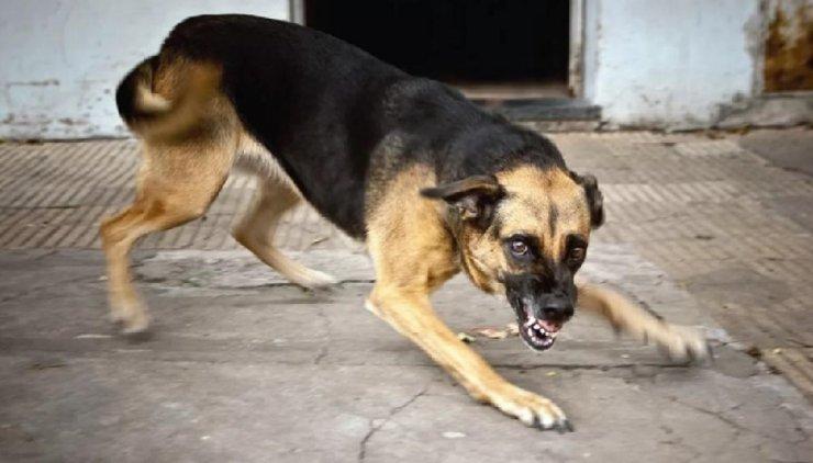 В 2020 году в Астрахани отловят 2700 бродячих собак