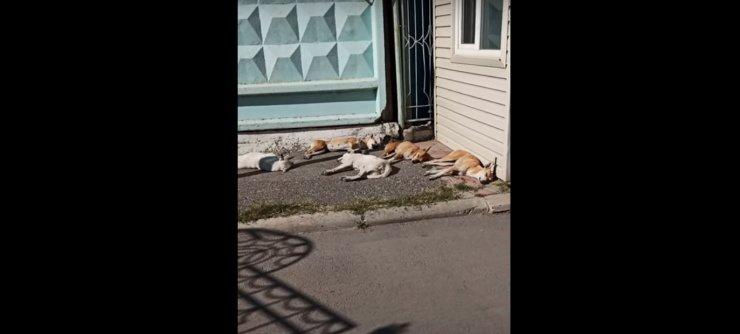 Стая собак в астраханском парке «Аркадия» попала на видео