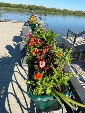 К празднованию Дня Астрахани высажено 50 тысяч цветов