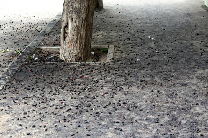 В Астрахани почернели тротуары