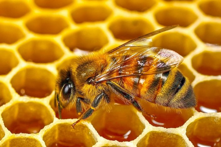 Местные пчеловоды готовят астраханцам сладкую жизнь