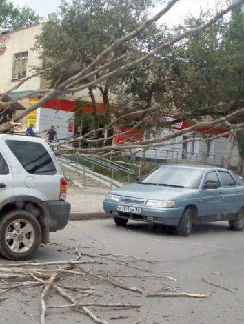 В разных районах Астрахани одно за другим падают деревья