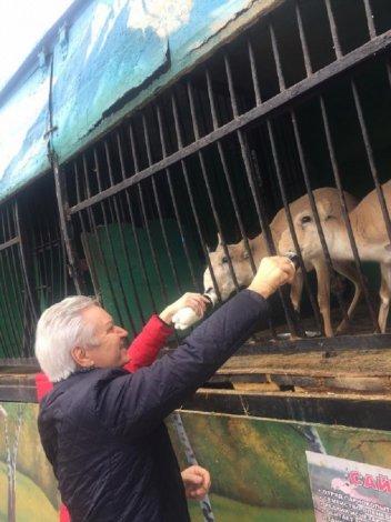 Судьба несчастных сайгаков решилась в Астрахани благополучно