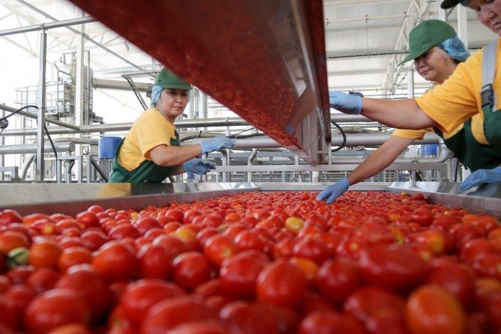Астраханские овощи активно идут на переработку
