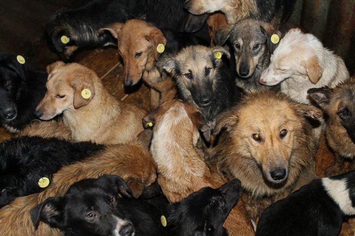 Показаны условия содержания отловленных уличных собак в Астрахани