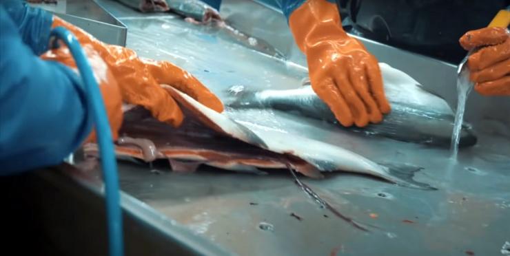 На астраханских рыбоперерабатывающих предприятиях выявлена масса нарушений