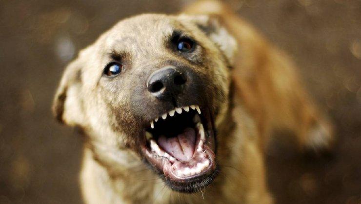Бродячие собаки вновь искусали прохожего в Астрахани