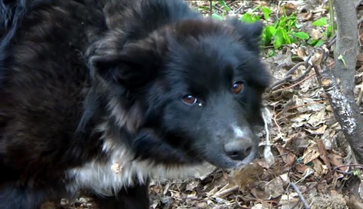 Как защититься от бродячих собак: обзор эффективных решений