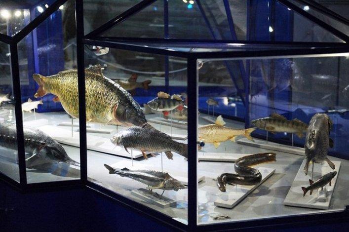 Астраханский краеведческий музей приглашает на рыбачьи выставки