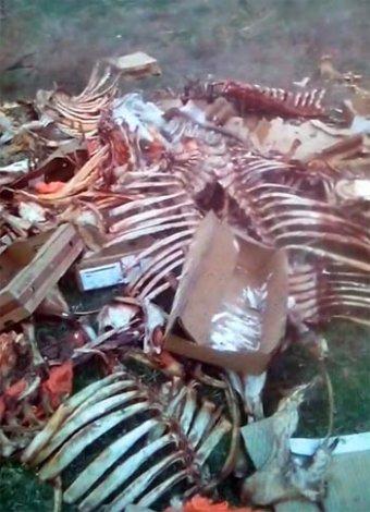Под Астраханью нашли нелегальную свалку говяжьих костей