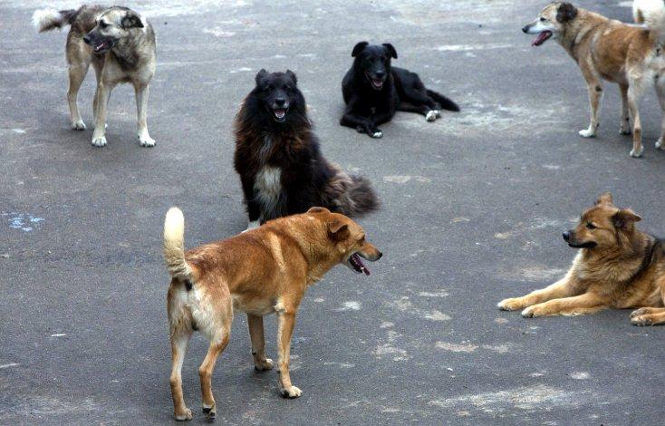 Бродячим собакам в Астрахани нашли объяснение