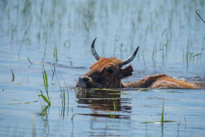 Астраханская область впервые за четверть века добилась оптимального паводка